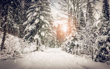 ray trace: Winter landscape. Road covered in snow in dense forest. Stock Photo