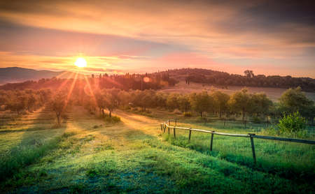 Sunrise over olive field in Tuscany, Italy Stock Photo