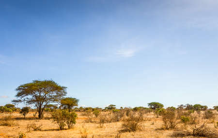 Unique savannah plains landscape with acacia tree in Kenya Zdjęcie Seryjne