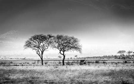 Black and white african savannah plains scenery in Kenya