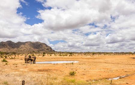 Herd of african elephants on savannah plains in Tsavo East park, Kenya