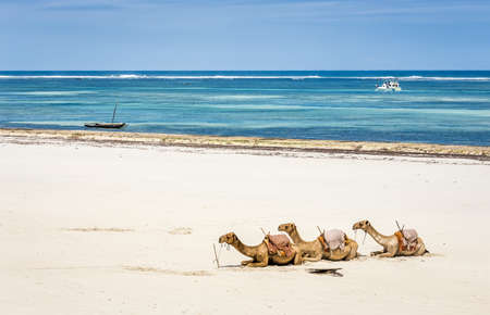 Camel and Diani beach seascape with turquoise Indian Ocean,  Kenya