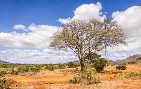 Paisaje único de llanuras de sabana con árboles de acacia en Kenia Foto de archivo