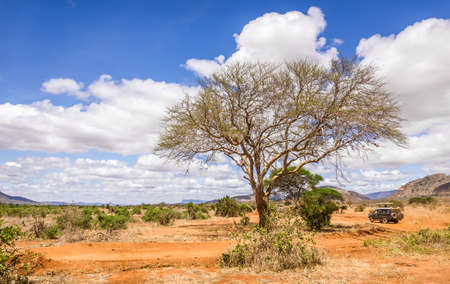 Paysage unique de plaines de savane avec acacia au Kenya Banque d'images