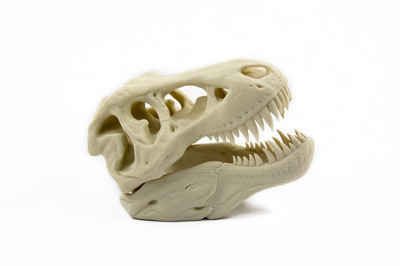 3D Printed Model Of A Dinosaur Skull Фото со стока - 36954309