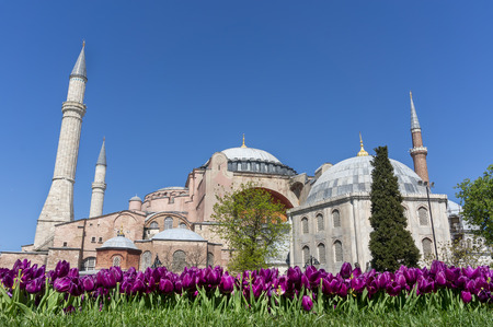 Hagia Sophia With Tulips On Foreground, Istanbul, Turkey