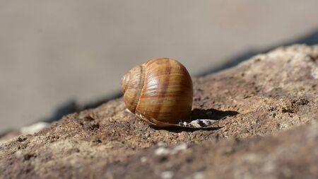 Close Up Shot Of A Snail Shell Фото со стока