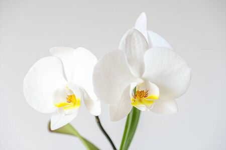 Close Up Shot Of White Orchids With A Gray Background Banco de Imagens