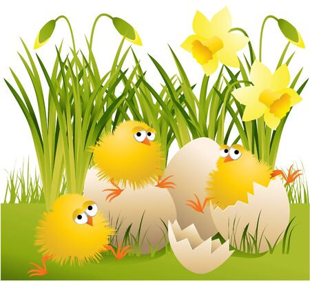 chicken and egg: Easter chickens  Illustration