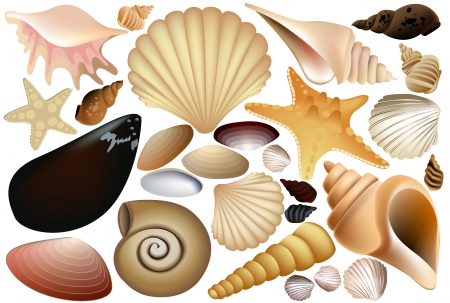 etoile de mer: Shell collection Illustration