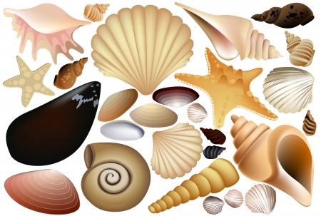 Shell kolekcja Ilustracje wektorowe