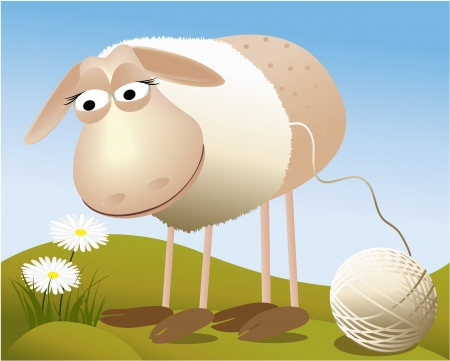 sheep wool: Sheep  Illustration