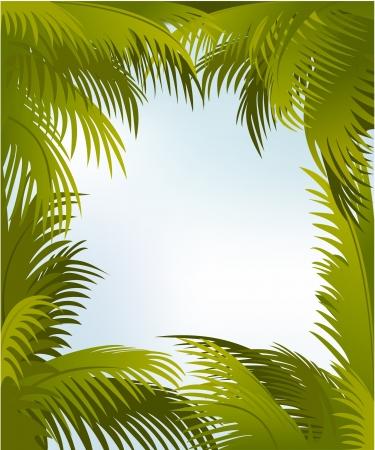 Palm frame  Illustration