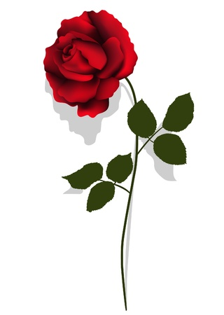 Red rose Stock Vector - 14765631
