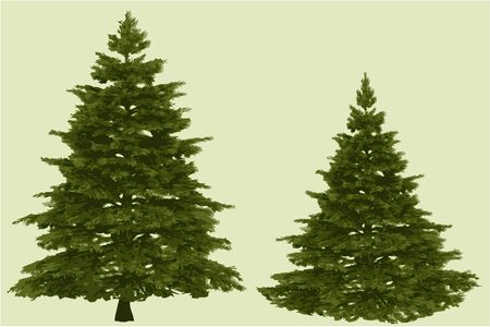 pine tree silhouette: Two Christmas trees