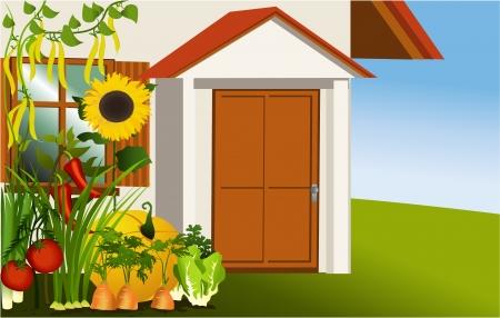 Vegetable garden Stock Vector - 17459674