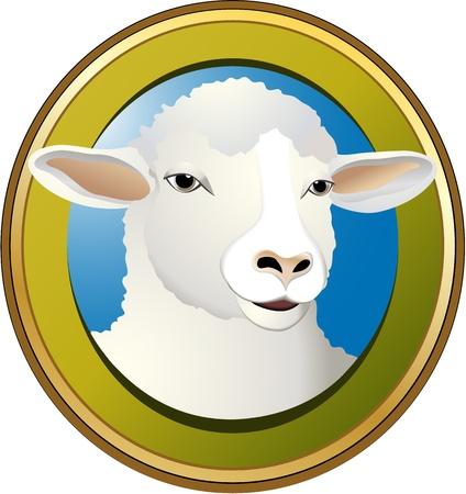 image lamb: Sheep