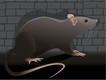 Rat Stock Vector - 18240943