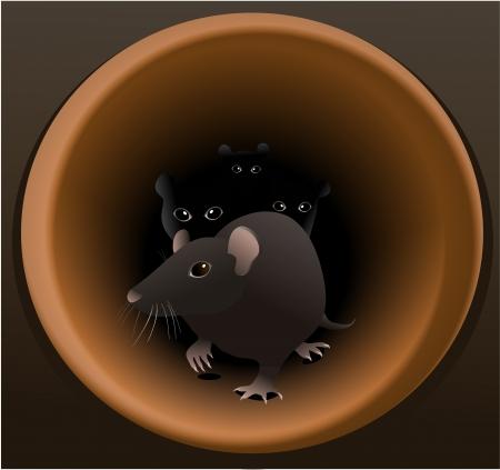 Rats Stock Vector - 18290731