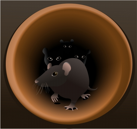 sewage system: Rats