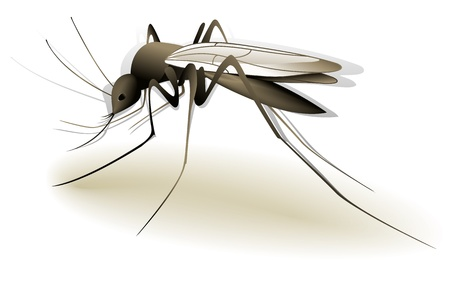 infected mosquito: Mosquito
