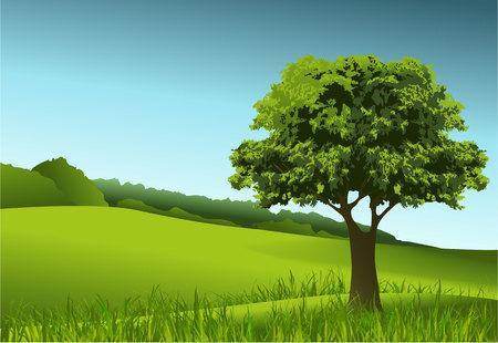 緑の孤独な木のある風景