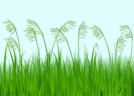grass: green grass