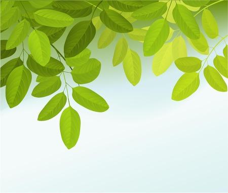Natura sfondo con le foglie degli alberi