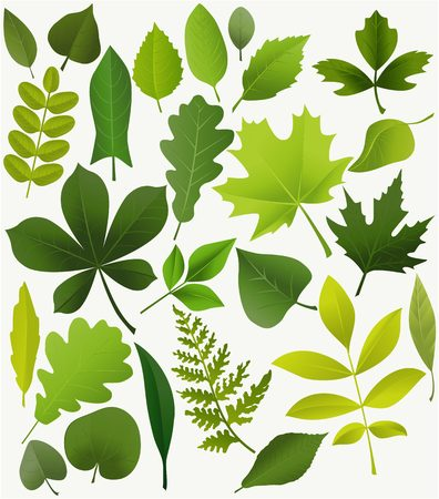 Set of popular tree leaves Vectores