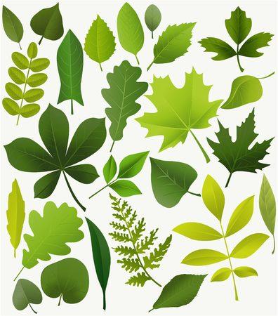 hojas de arbol: Conjunto de hojas de los árboles populares