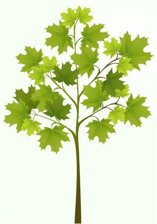 colour image: Illustration of simple tree Illustration