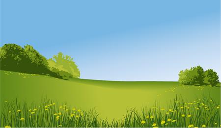 grass land: Rural landscape