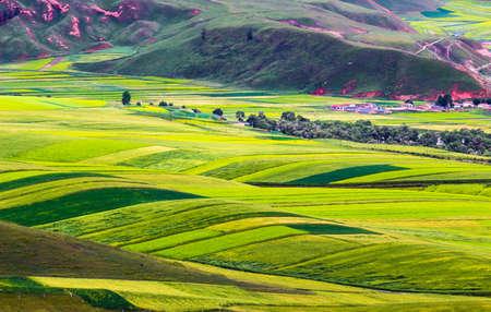De mening van het landschapslandschap van een weide in Qinghai-Provincie, China