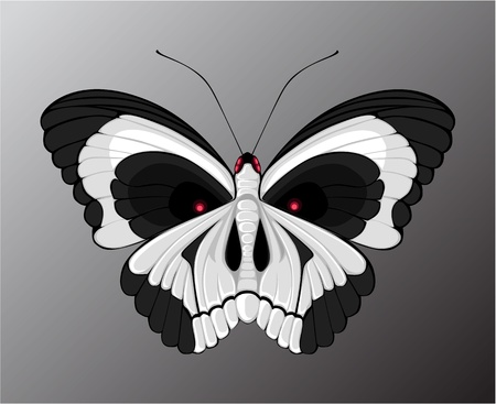 butterfly with a pattern on the wings of the skull Vector