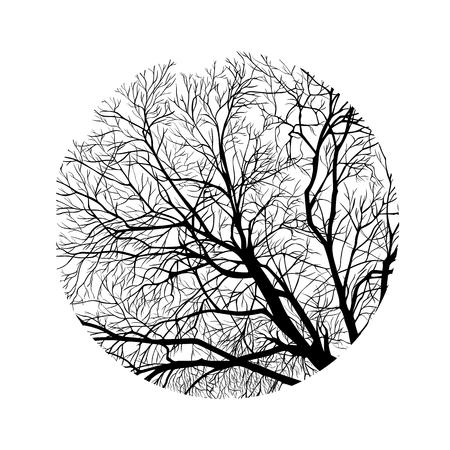 marco de ramas de árboles