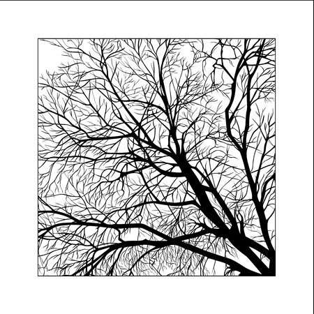 frame of tree branches