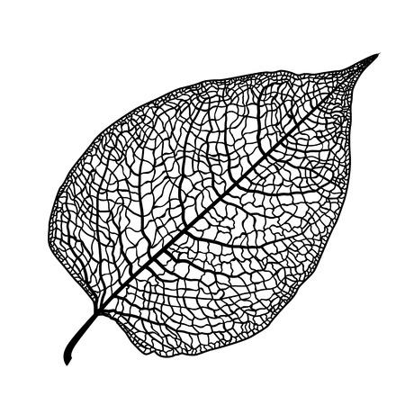Vector de la hoja esqueleto de un árbol sobre un fondo blanco. El elemento gráfico puede ser utilizado como un fondo de diseño, tarjetas de visita, tarjetas postales, etc.