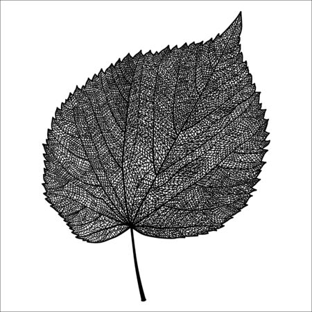Vector skeletonized leaf on a white background. The graphic element may be used as a design background, business cards, postcards, etc.
