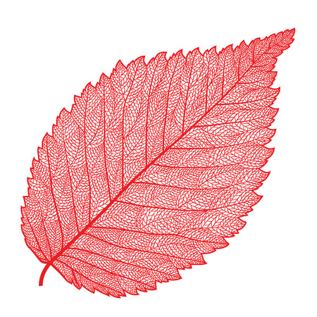 Vector skeletonized leaf on a white background. The graphic element may be used as a design background, business cards, postcards, etc. Фото со стока - 52901236