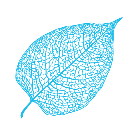 Vector skeletonized leaf of a tree on a white background. The graphic element may be used as a design background, business cards, postcards, etc.