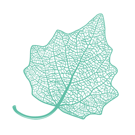 Vector skeletonized leaf of a Lombardy poplar on a white background. The graphic element may be used as a design background, business cards, postcards, etc.
