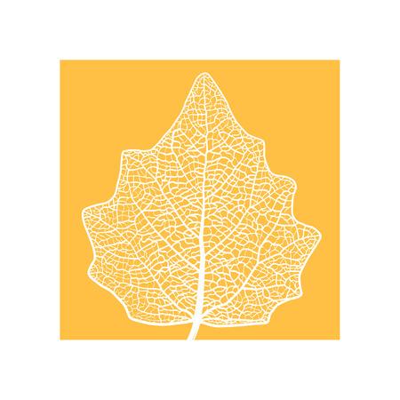 skeletonized leaf of a Lombardy poplar