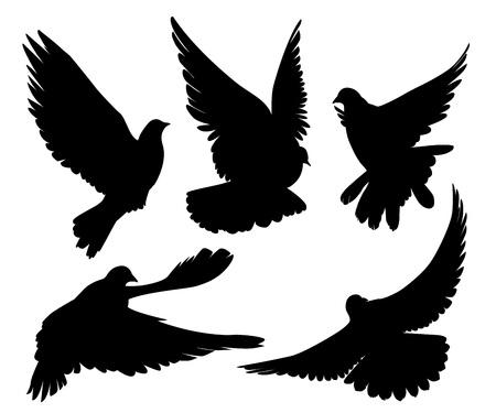 zwarte duiven silhouet