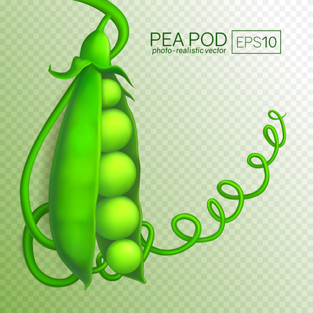 Green pea pod isolated on transparent background. Fresh Pea Pod in a realistic style. This pea can be placed on any background. Vector illustration