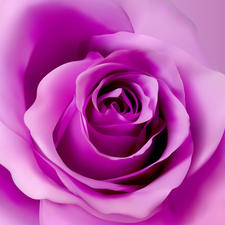 Square background with violet realistic rose. 3d rose bud vector illustration.