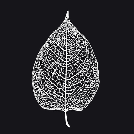 Vector skeletonized leaf of a tree on a black background. The graphic element may be used as a design background, business cards, postcards, etc. Reklamní fotografie - 124130689