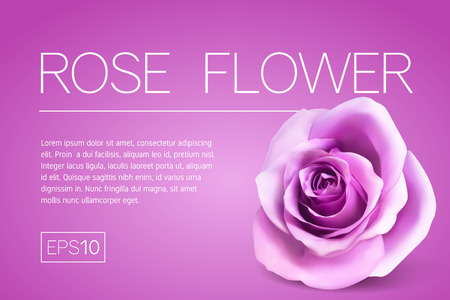 Minimalistic banner with a realistic rose on pink background. 3d bud rose. Frame for title and text. Template for design of a flyer, banner or postcard in the minimal style.