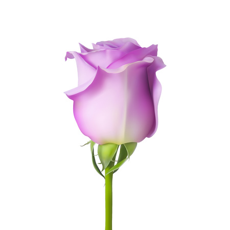 Realistic vector rose on white background. 3d bud of a pink rose. Ilustrace
