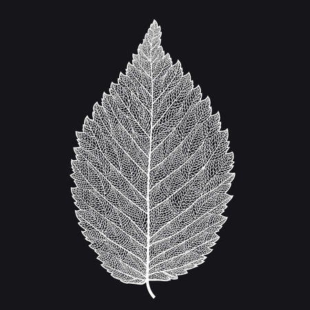 Vector skeletonized leaf on a black background. The graphic element may be used as a design background, business cards, postcards, etc. Иллюстрация