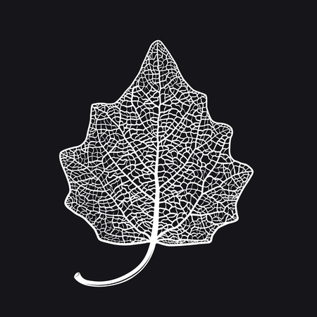 Vector skeletonized leaf of a Lombardy poplar on a black background. The graphic element may be used as a design background, business cards, postcards, etc.